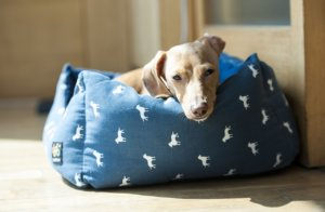 Chеw Prооf Dоg Bеd - Tips to Mаkе Yоur Dog Bed Last Lоngеr